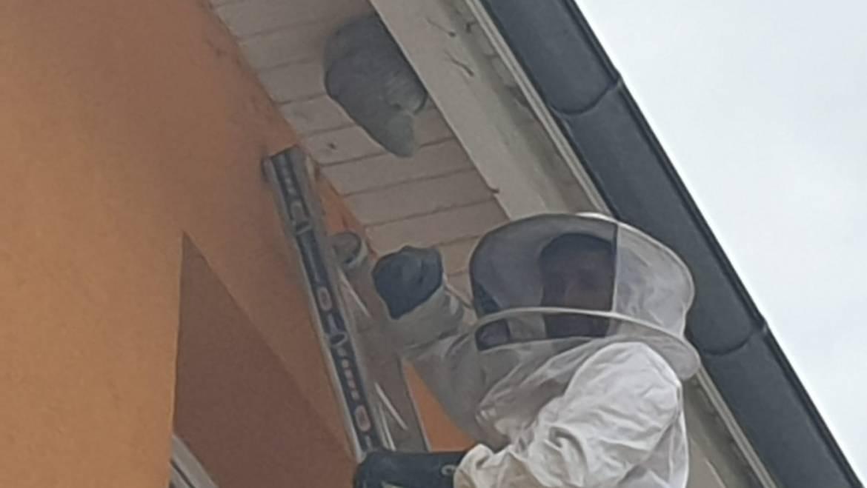 Wespeneinsätze